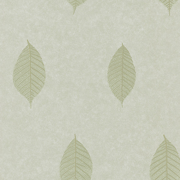 Malabar Sage Leaf Wallpaper
