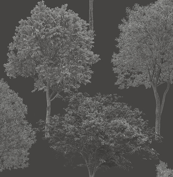 Tree Tops Black Photographic  Wallpaper
