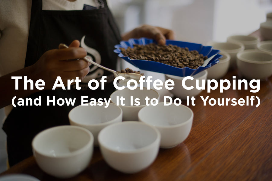 The Art of Coffee Cupping (and How Easy It Is to Do It Yourself)