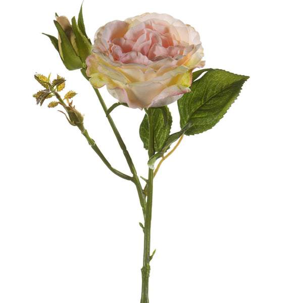 Pale Peachy Pink English Rose & Bud -Accessories- Cream Cornwall