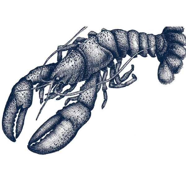 Lobster Art Print In Blue On White In Three Sizes - A2, A3 And A4 -Accessories- Cream Cornwall