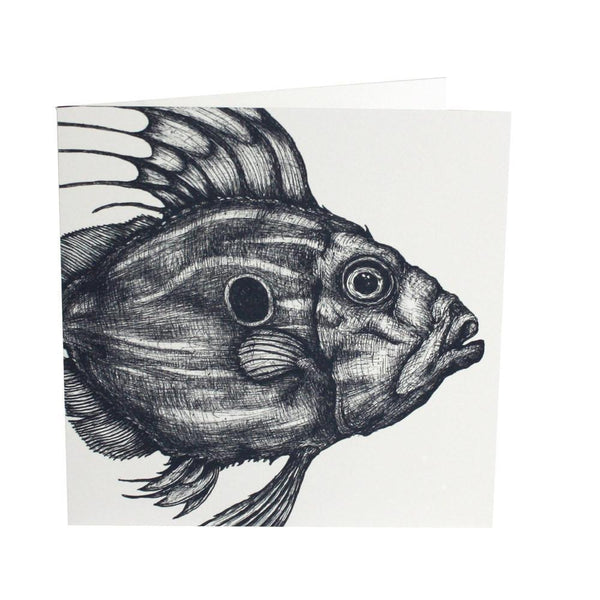 John Dory Card - cream cornwall