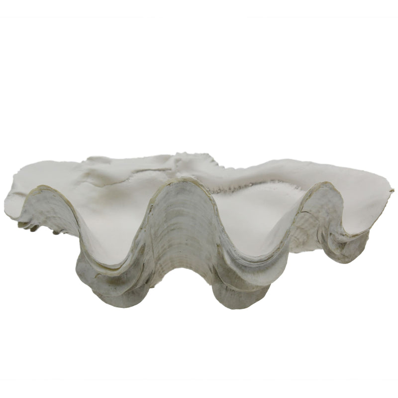 Resin Ruffled Clam -Accessories- Cream Cornwall