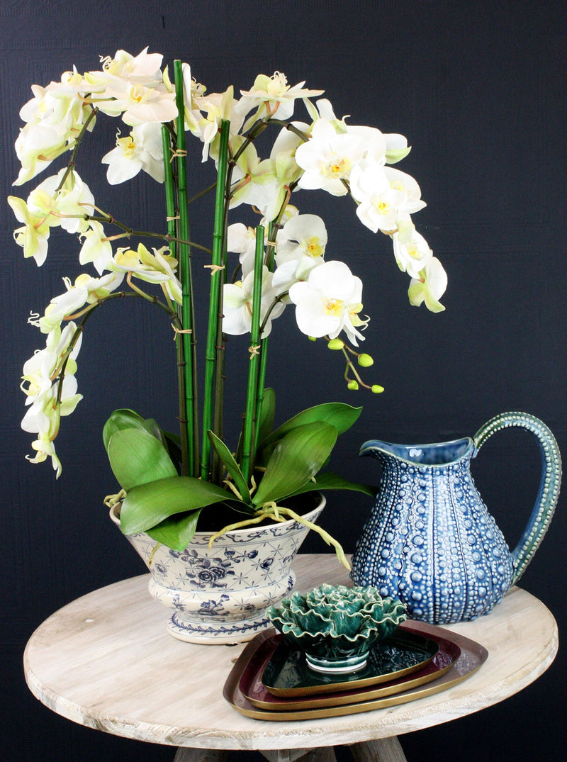White Orchid Phal in Ceramic Planter -Accessories- Cream Cornwall