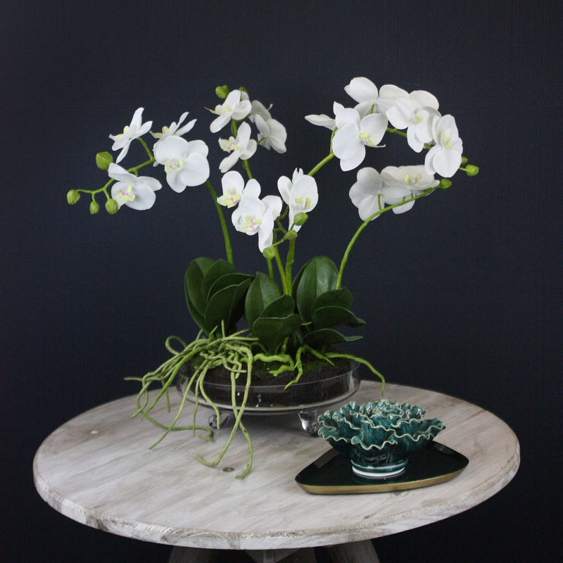 White  Phalaenopsis Orchid in Glass Bowl -Accessories- Cream Cornwall