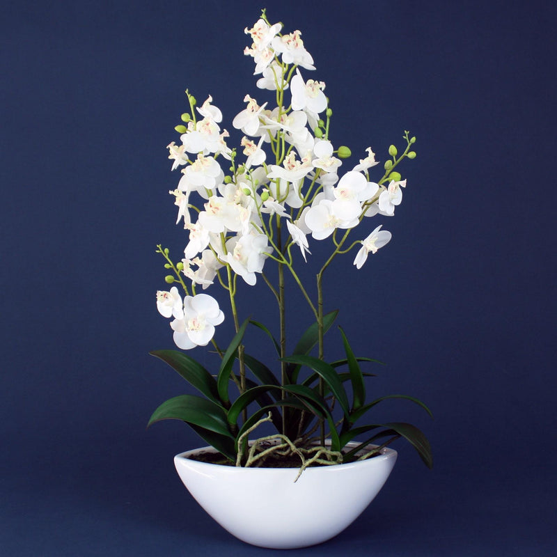 Hot House Faux Orchid In Ceramic Pot -Accessories- Cream Cornwall