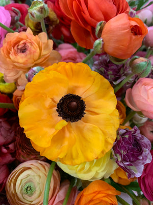Ranunculus-Open Face Any (Grower's Choice)