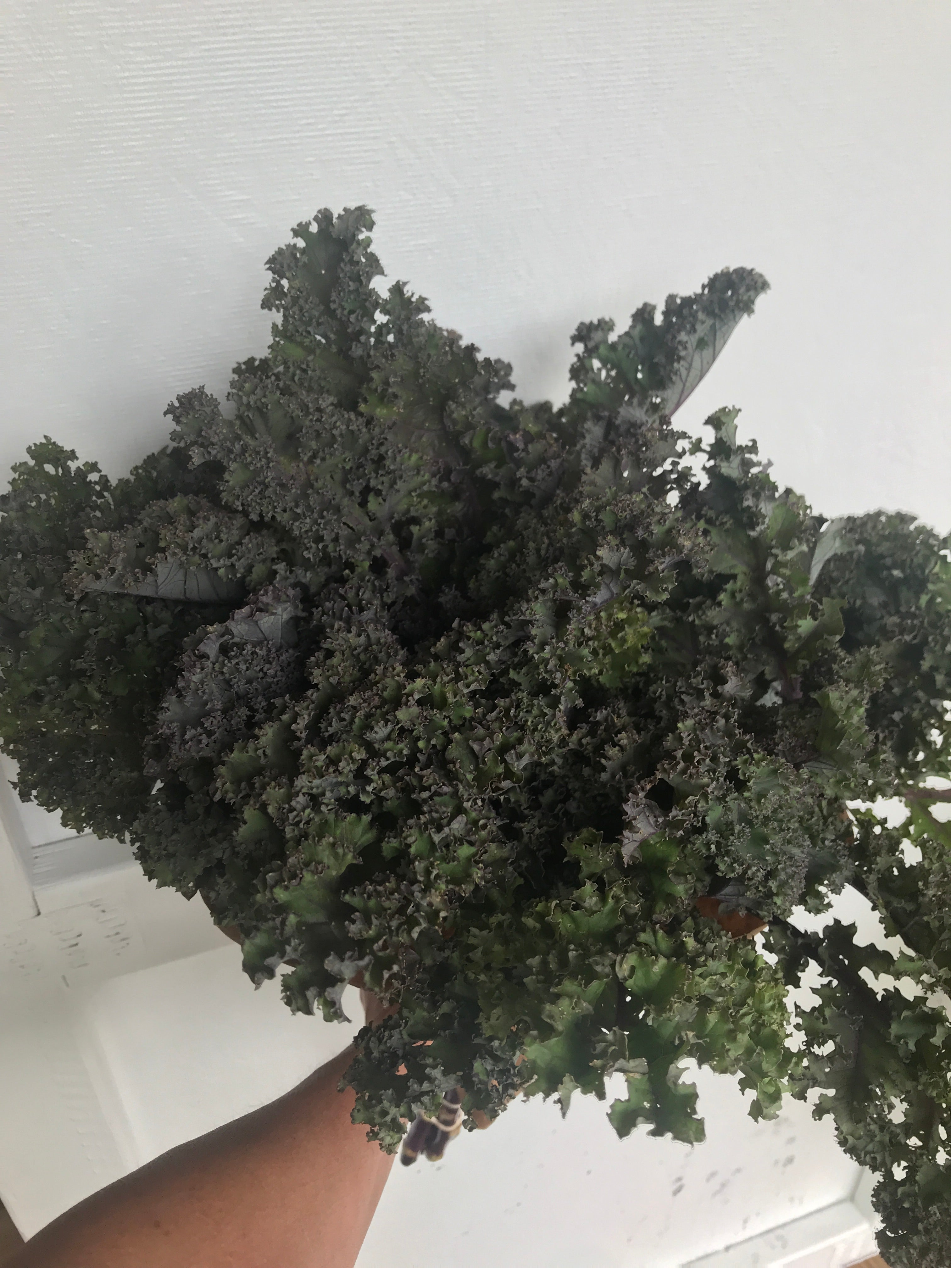 Kale-Red Bor