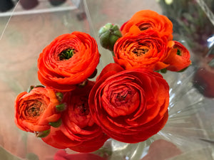Ranunculus-Super Green