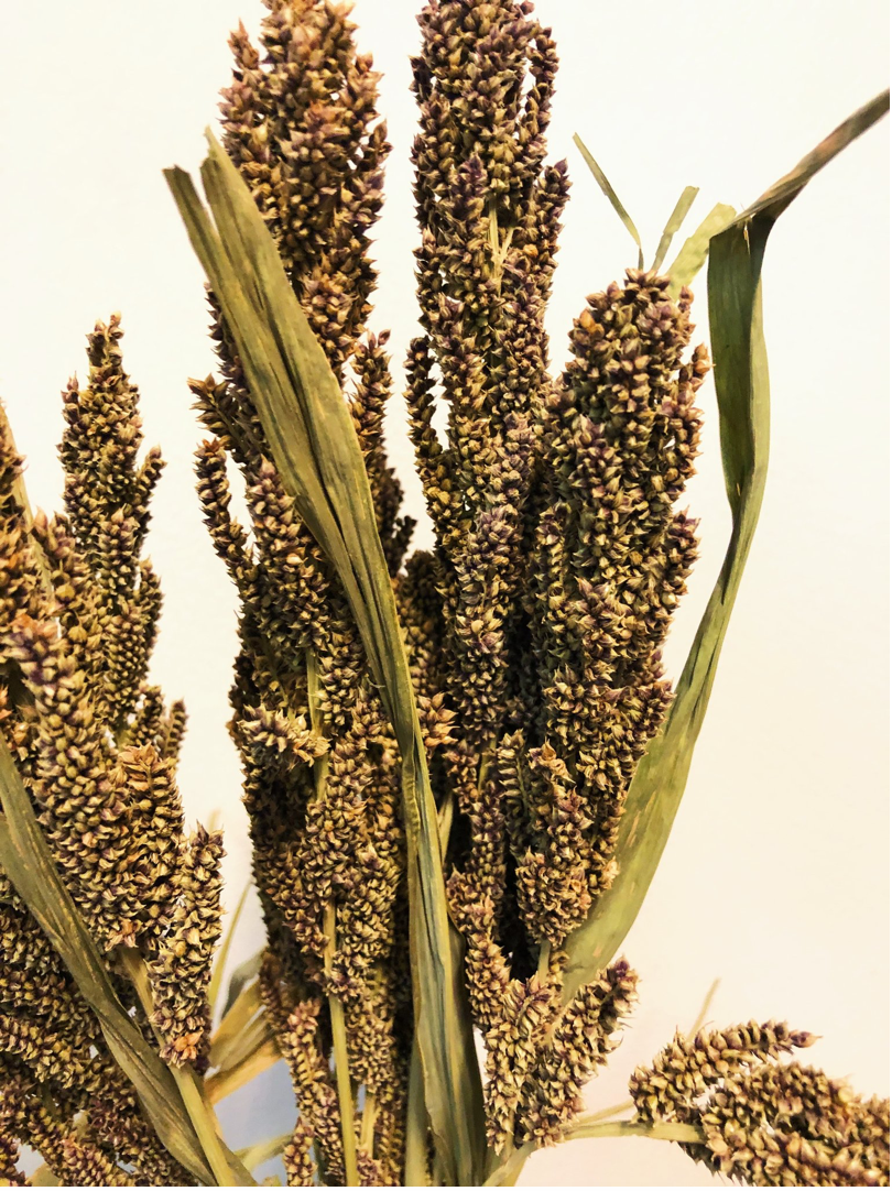 Dried Grains-Japanese Millet