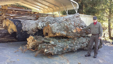 Recent large burls - ready to cut