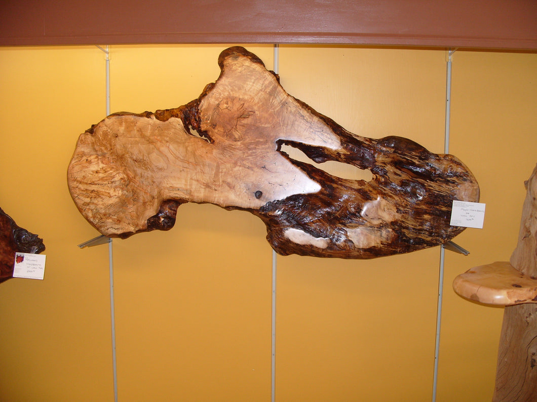 Maple Burl Wall  Art