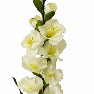 6 Gladiolus Stems-Cream