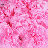 36 GIANT Your-Special-Day Carnations - Pink( Sold Out )