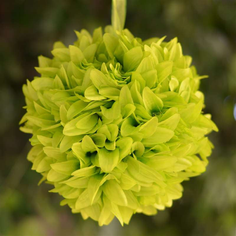 Lime artificial dahlia kissing flower balls wedding hanging decor 4 x lets fly together dahlia kissing balls lime mightylinksfo