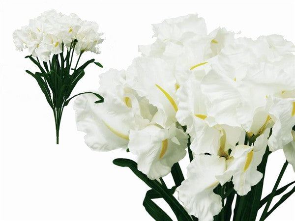 36 Large Iris Flowers-White