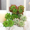 "Set of 3 | 12"" Assorted Artificial Succulent Plants Echeveria Long Stem"