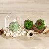 "Set of 3 | Multi Colored Fake Succulents | 3"" Parva Echeveria Stems Decorative Artificial Plants"