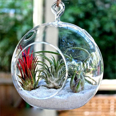 Gigantic Globe Glass Terrarium 4/pk