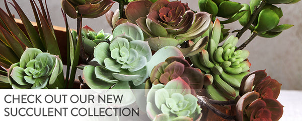 Check out our new succulent collection!