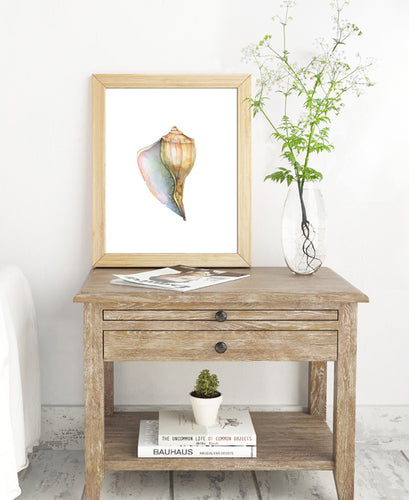 Conch Shell Giclée Print, Giclée - Ashley Prejoles Art