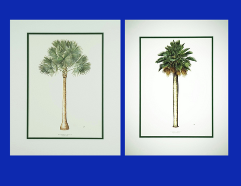 Peebles Palm Trees tropical art set