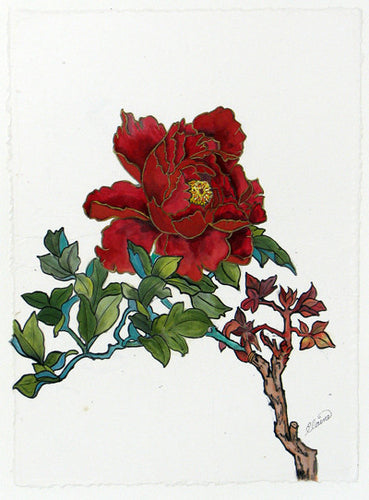 Red Beauty flower original etching