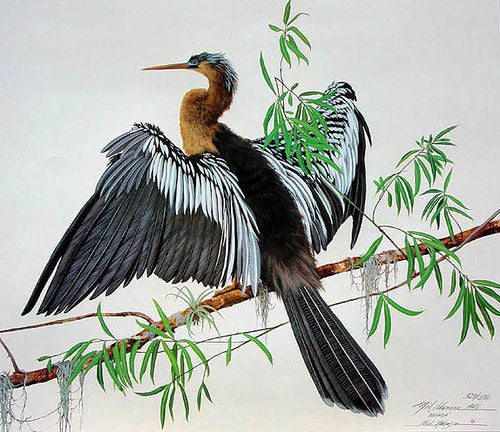 Anhinga a Water bird with open wings on a tropical with green foliage