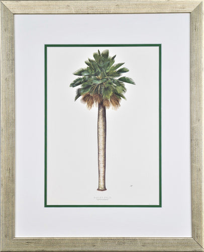 Bailey Palm - by artist Peebles, Diane