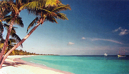 White sand beach with Palm Trees and Turquoise water Caribbean-Florida