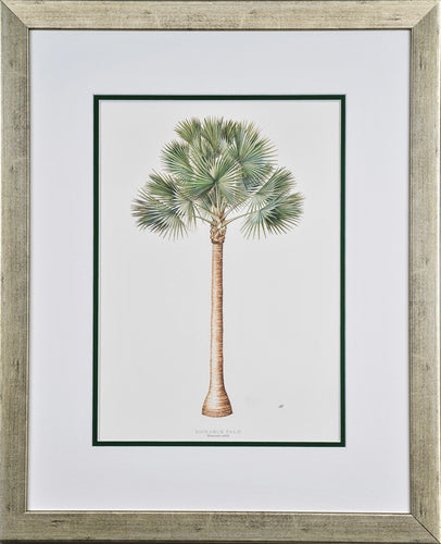 Bismarck Palm - by artist Peebles, Diane