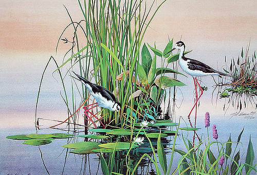 Florida, Tropical, Birds, Adamson, Art Gallery, Clearwater