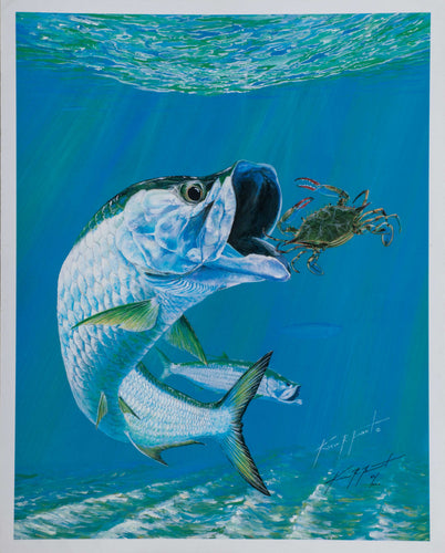 Tarpon fish crab  fishing