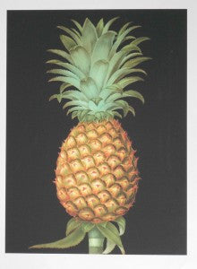 Brookshaw-Exotic-Pineapple-I-23x17-BSLV-0126-Offset-Print-on-Rag-Original-Painting-from-1770-list-95-ours-40-e1449072392222-220x300.jpg