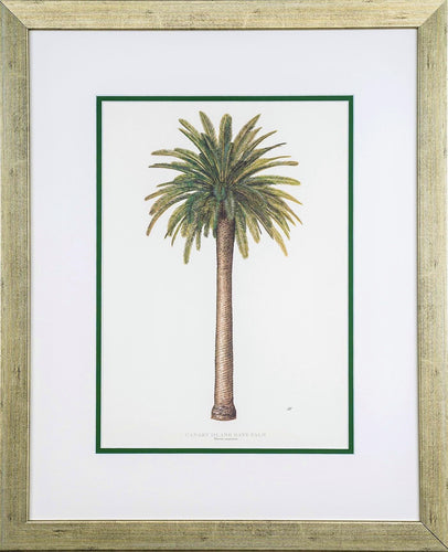 Canary Island Date Palm - by artist Peebles, Diane
