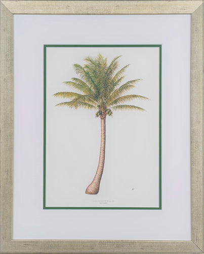 Coconut Palm - by artist Peebles, Diane