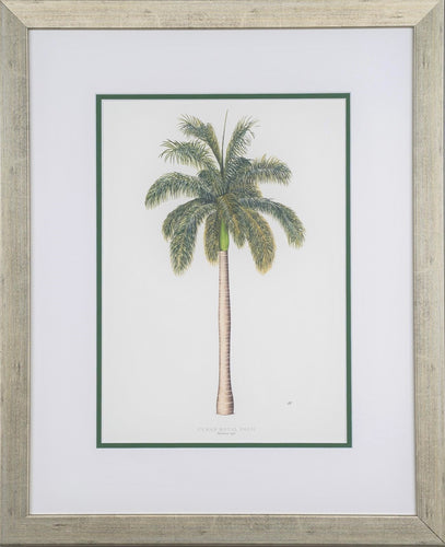 Cuban Palm - by artists Peebles, Diane