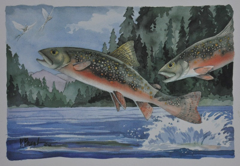 Brent, P - Brook Trout - 8 X 12 image
