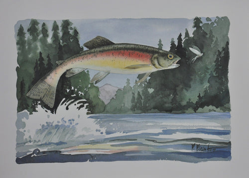 Brent, P - Rainbow Trout - 8 X 12 image