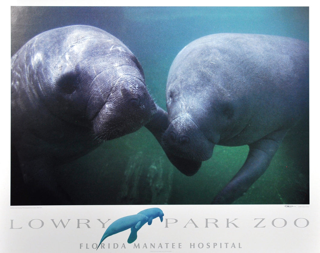 Ucker, Chris - Buffett & Stormy Poster for Lowry Park Zoo, Tampa, FL 24 X 30 paper - 18 X 27.5 image