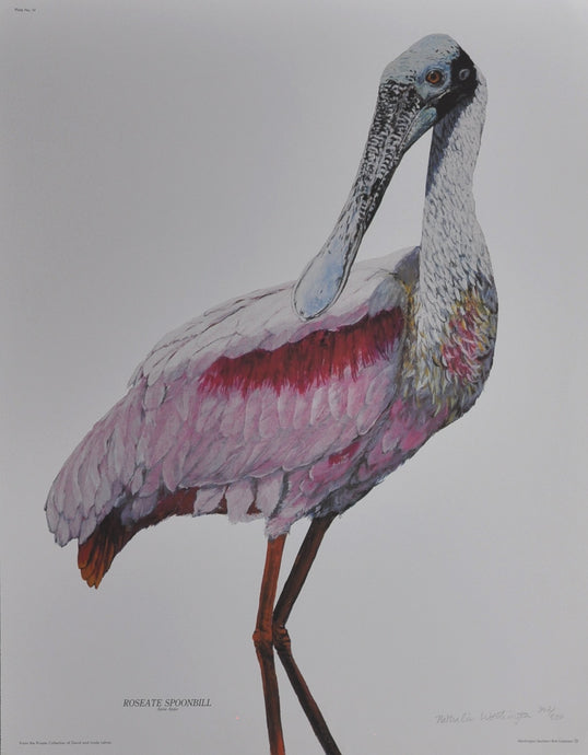 Worthington, Nathalie - Roseate Spoonbill - 25 X 20 Limited Edition Offset on Paper