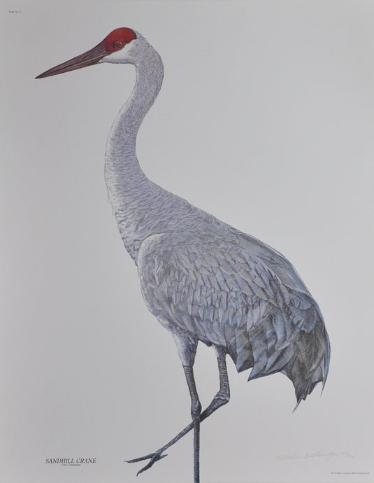 Worthington, Nathalie - Sandhill Crane 25 X 20 Limited Edition Signed/Numbered Offset on Paper
