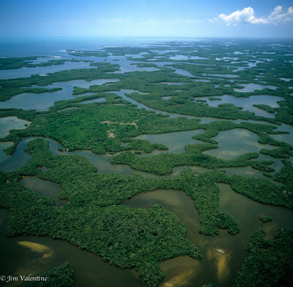 cape romano preserve everglades swamp nature forrest forest lake pond river creek trees reflection james valentine photography