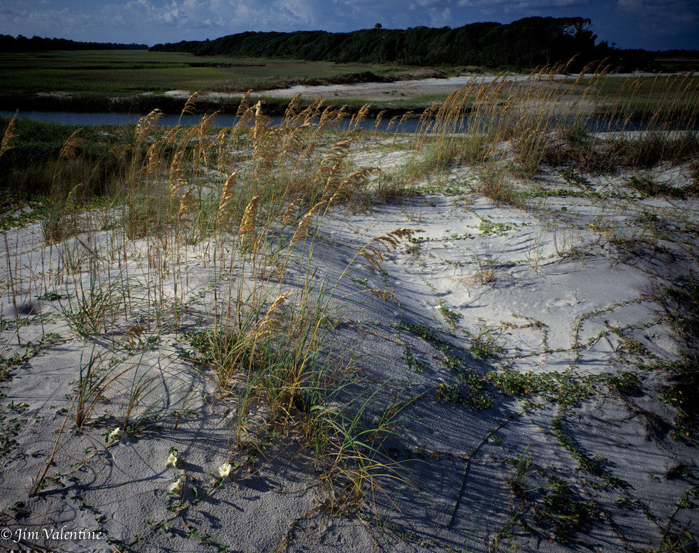 sand dunes ocean florida beaches state parks james valentine beautiful white