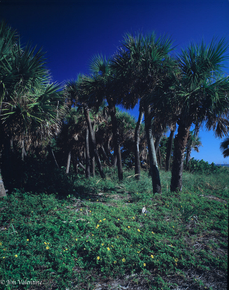 north palm beach florida state parks palm trees beautiful wild life james valentine