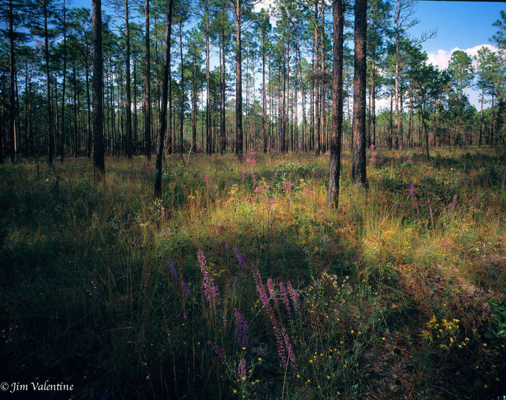 blackwater river state park florida nature trees wildlife woods landscape photography james valentine