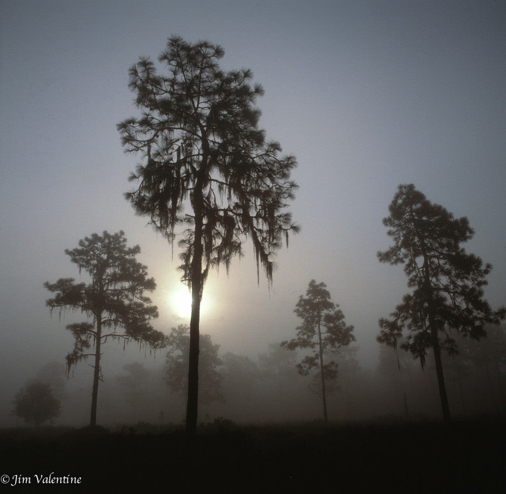 orange county florida orlando trees cypress state parks sunrise sunset fog mist james valentine photography