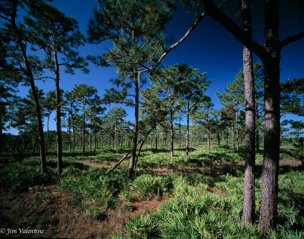 disney kissimmee orlando wilderness preserve photography nature trees