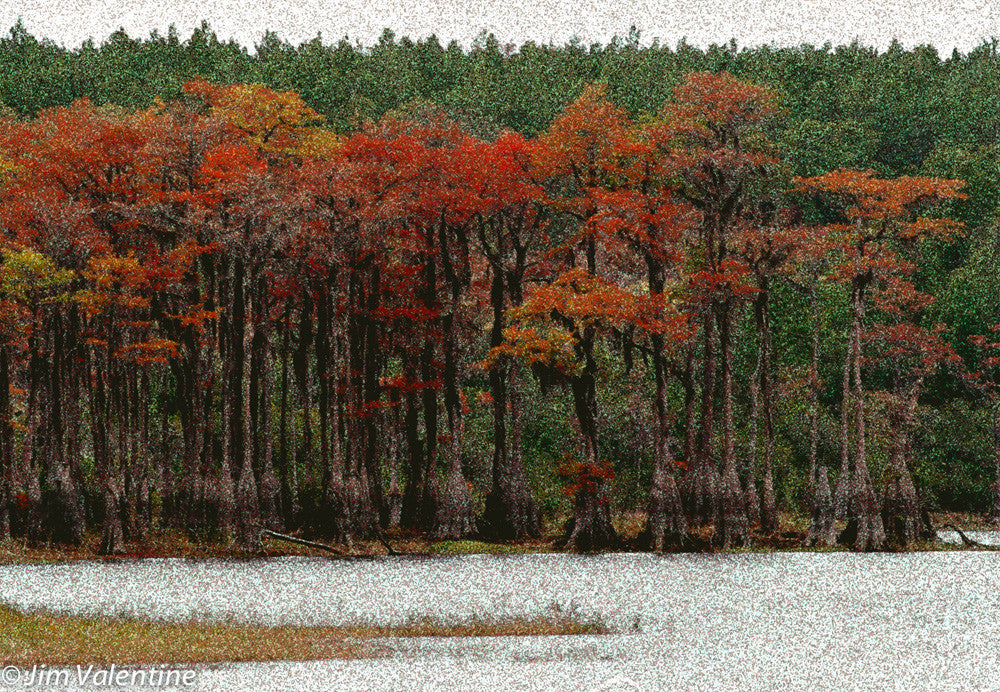 autumn fall leaves lake florida state parks nature cypress springs james valentine