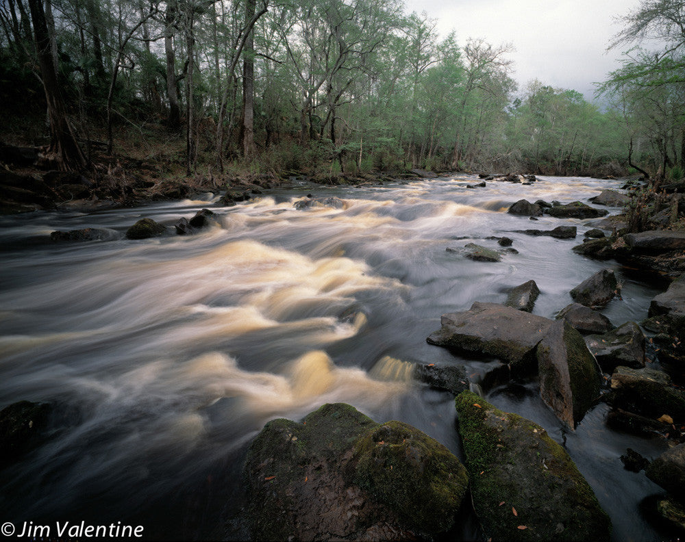 Rushing River nature florida state parks nature photography james valentine